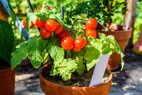 Освещение для помидоров на балконе