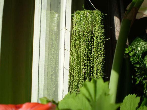 зеленые бусины