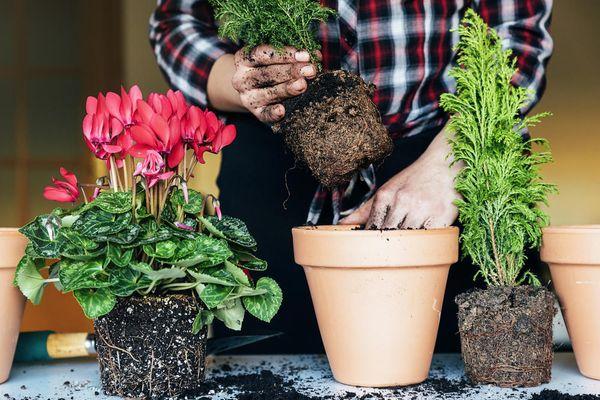 Очистить корни растения