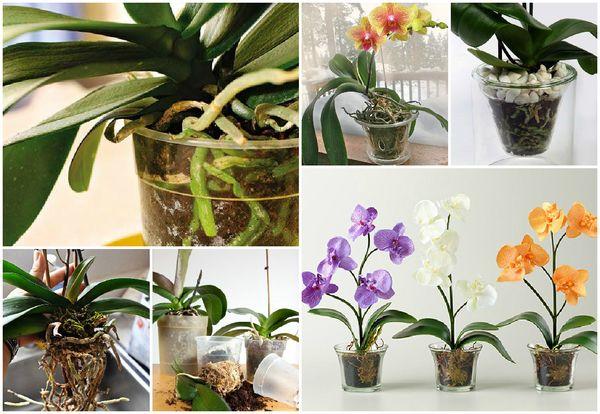 Как выбрать емкость для пересадки орхидеи