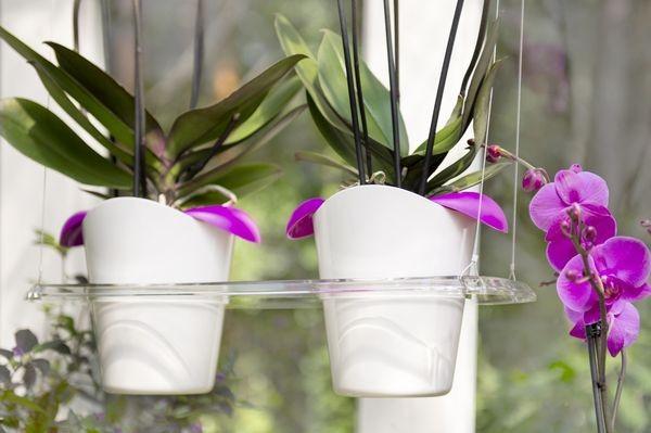 Орхидеи в подвесных кашпо