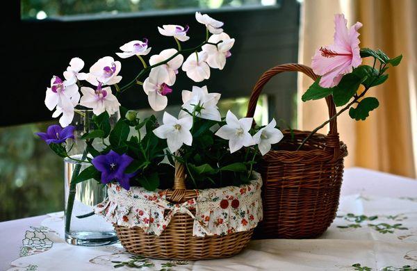 Корзинки для орхидей