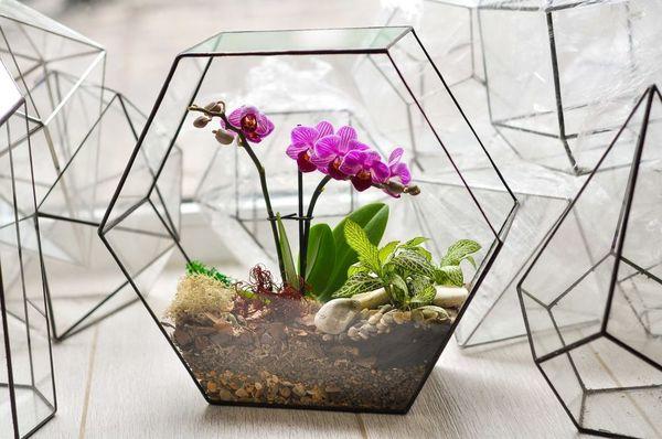 Емкости из стекла для орхидей