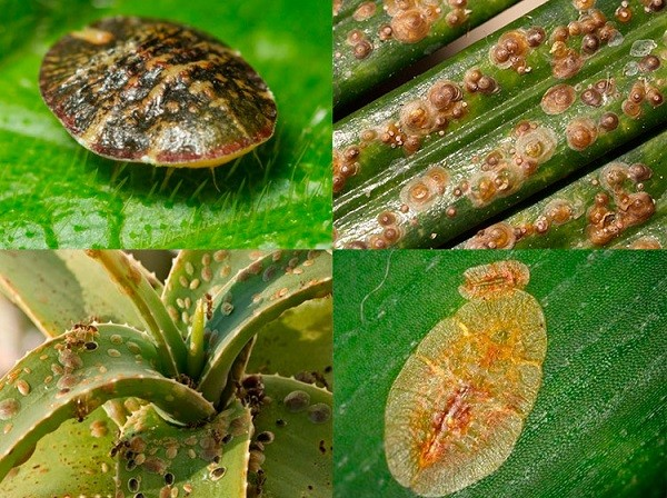 Вредители на листьях растений