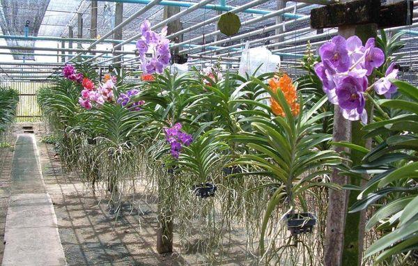 Температурный режим для орхидей
