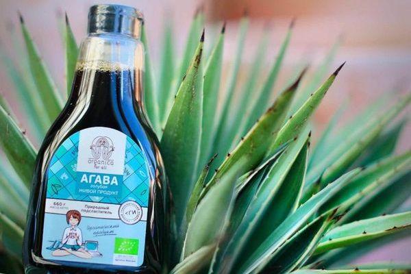 Лечебные свойства агавы