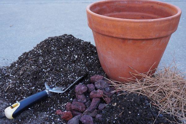 Почва для азалии
