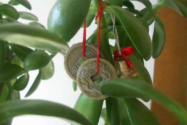 денежное дерево по фен-шуй