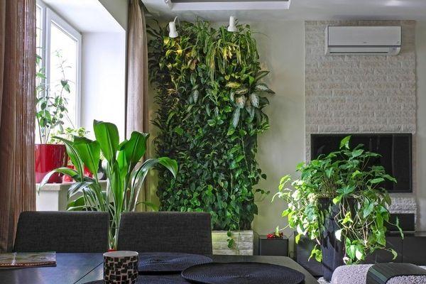 тенелюбивые растения в интерьере