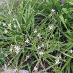 растение цветет