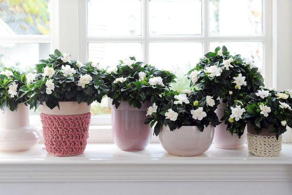 Пересадка комнатных цветов - 160 фото и видео рекомендации по пересадке различных видов комнатных растений