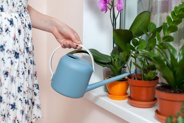 Правильный полив растения