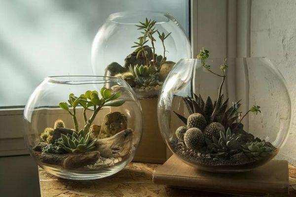 Флорариум в аквариуме