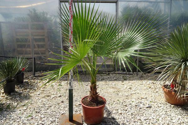 Освещение для пальмы