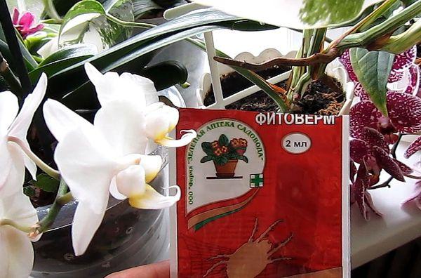 Фитоверм для орхидей