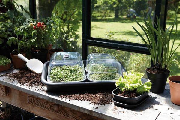 Грунт и дренаж для посадки зелени
