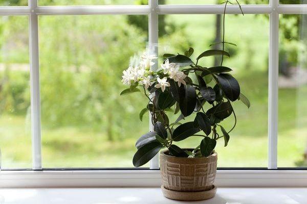 Растение в период покоя