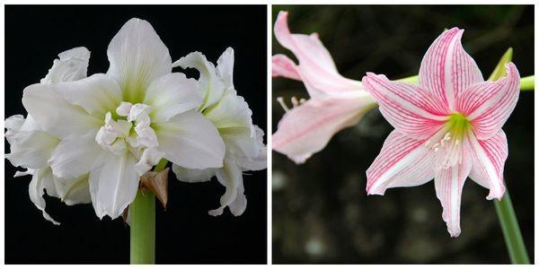 Соцветия и лепестки