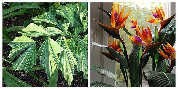 Интересные виды комнатных растений
