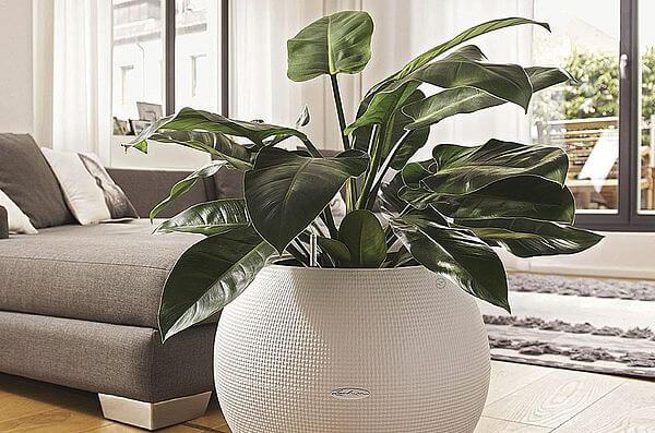 Плюсы и минусы больших растений