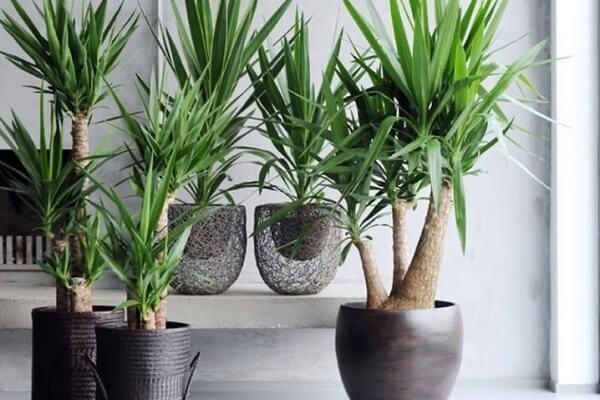 Емкость для растения