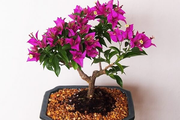 Растения в стиле бонсай