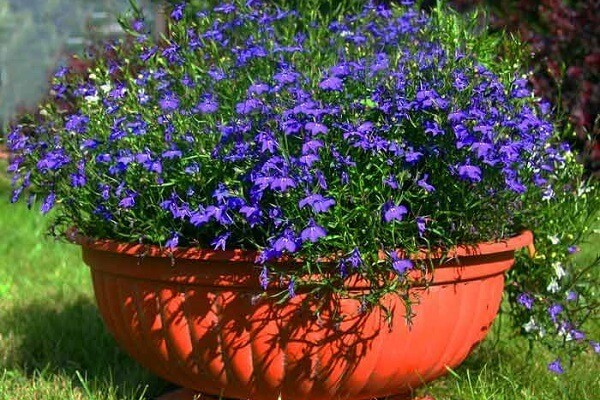Цветок в вазоне