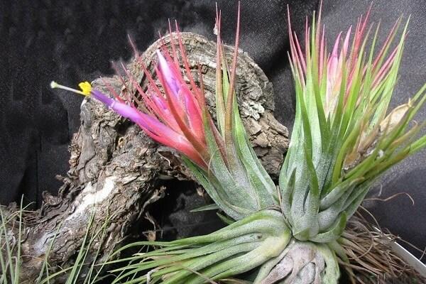 Почва для растения