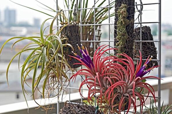 Выбор емкости для растения