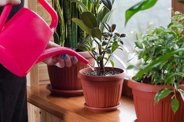 перекись водорода для корней