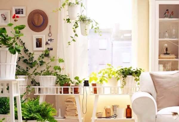 безопасные растения