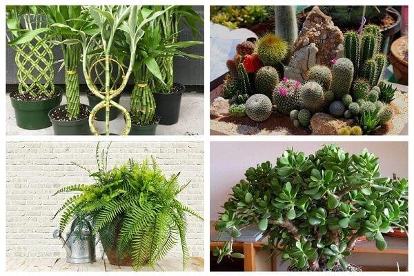 денежные растения