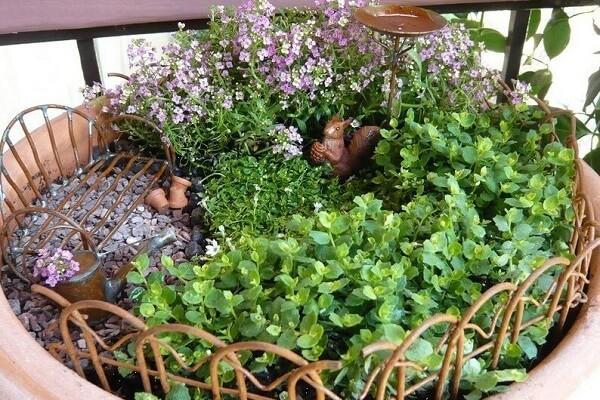 гелксина с другими растениями