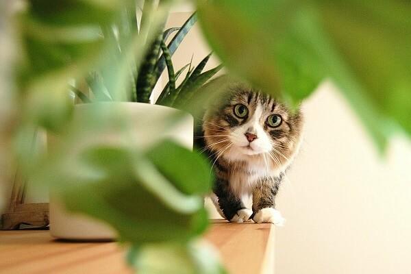 вредные растения для животных